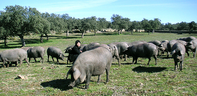 イベリコ豚に囲まれている、四代目店長:中野貴仁。